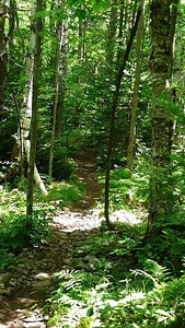 This is a typical example of what the trails were like, although some had more roots.