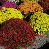 535 Flowers