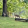 612 Deer
