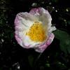 583 Flower