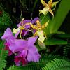 590 Orchids