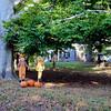 517 Halloween House