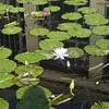 587 Lily Pond