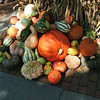 559 Pumpkins Close