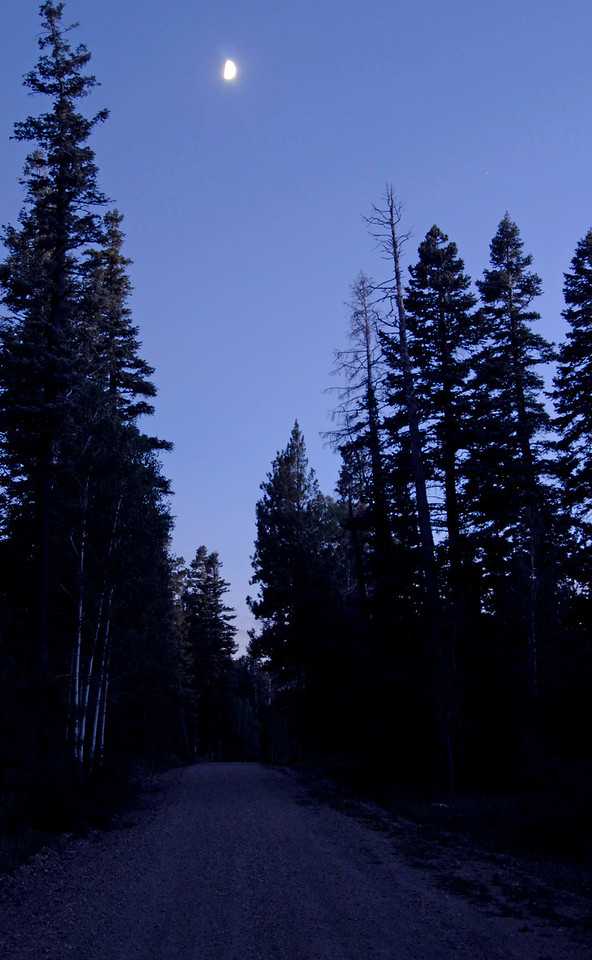 Moon above Forest Road 611.