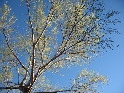 Sedona Arizona '06 02