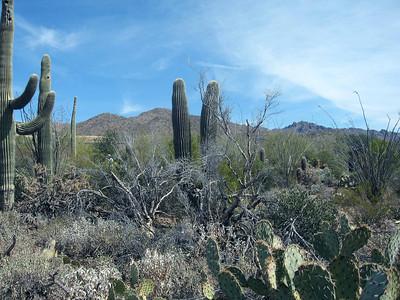 Arizona Desert Camp 08