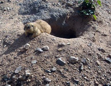 Arizona Desert Camp 02