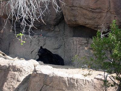 Arizona Desert Camp 04