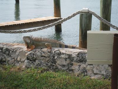 Florida Keys '09 23