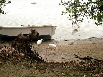 Florida Keys '09 11