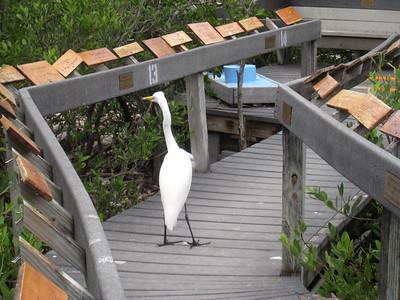 Florida Keys '09 2