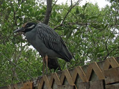 Florida Keys '09 6