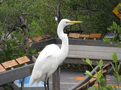 Florida Keys '09 3