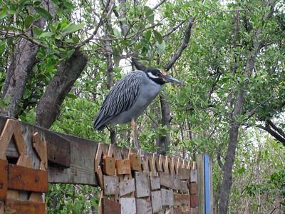 Florida Keys '09 5