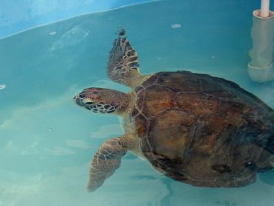Florida Keys '09 22