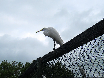 Florida Keys '09 4