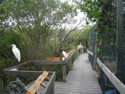 Florida Keys '09 1