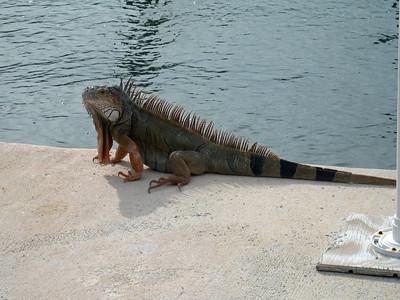 Florida Keys '09 24
