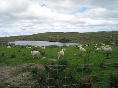 Ireland 2009 99
