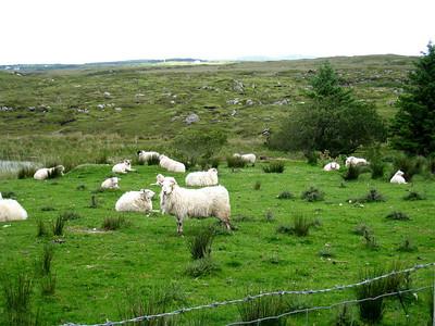 Ireland 2009 100