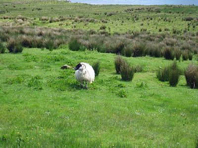 Ireland 2009 113
