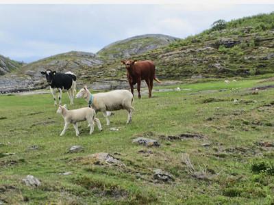Norway 2010 17
