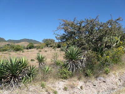 Oaxaca 2008 BAC 205