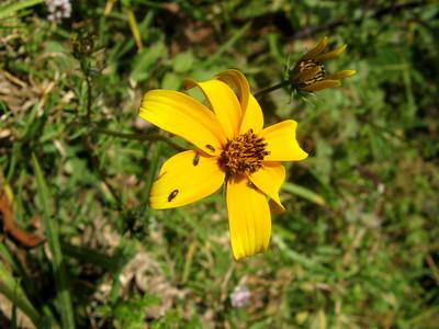 Oaxaca 2008 BAC 273