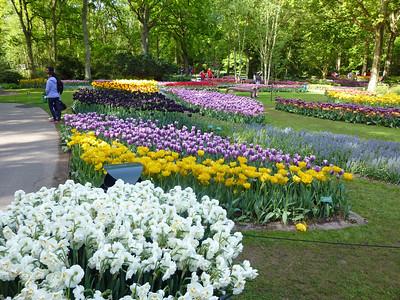 Amsterdam Keukenhof Gardens 2015  10