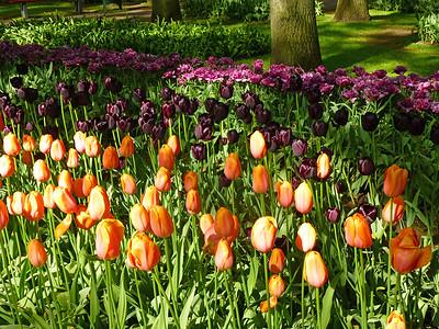 Amsterdam Keukenhof Gardens 2015  13