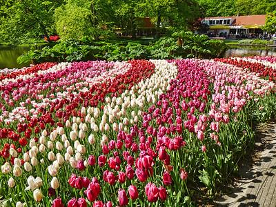 Amsterdam Keukenhof Gardens 2015  26