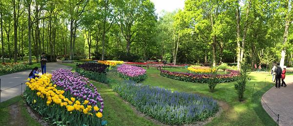 Amsterdam Keukenhof Gardens 2015  9