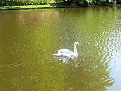 Amsterdam Keukenhof Gardens 2015  21