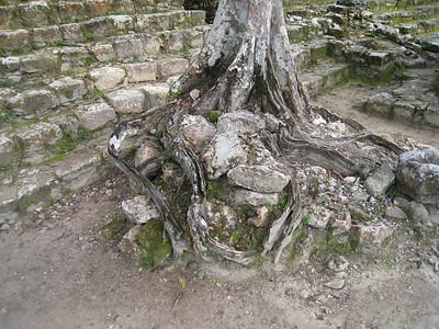 Mexico Bike to Cobá:Cenote 11:30:07 27