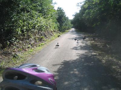 Mexico Bike to Cobá:Cenote 11:30:07 11