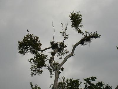 Mexico Bike to Cobá:Cenote 11:30:07 23