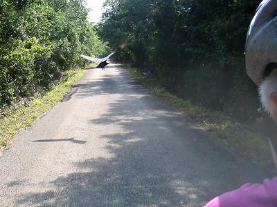 Mexico Bike to Cobá:Cenote 11:30:07 12