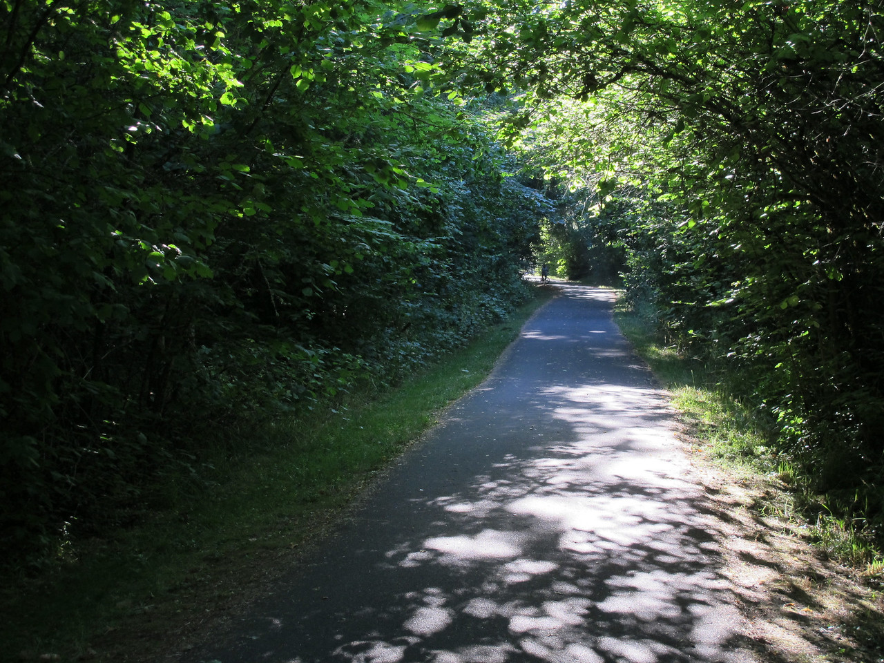 The bike path to Champoeg State Park.
