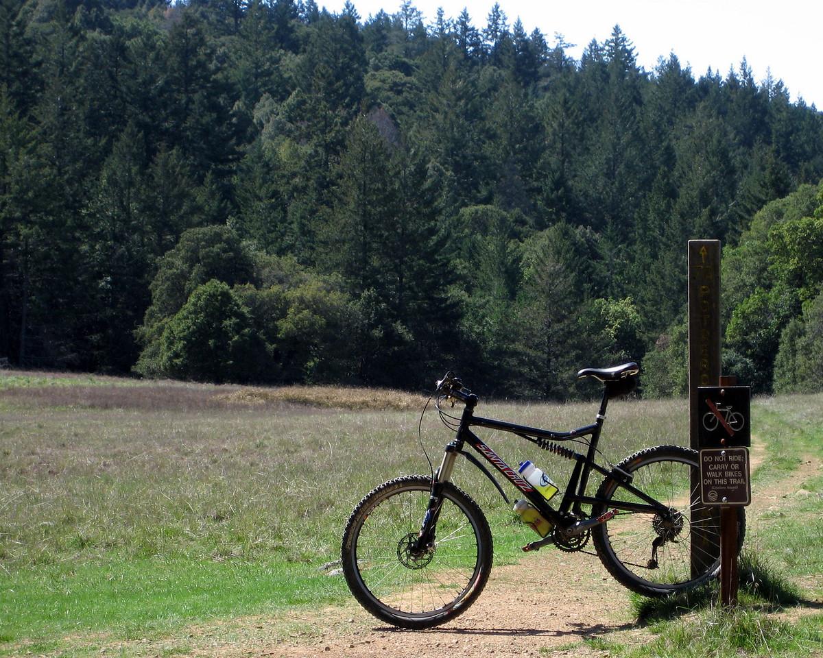 Portrero Meadow, Mt. Tam