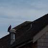 huge eagle on house