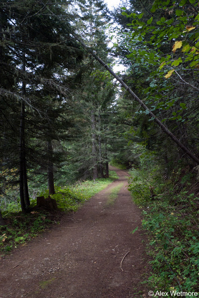 This is a typical CdA NF side road.  Narrow, well maintained, no traffic, and either going up or down