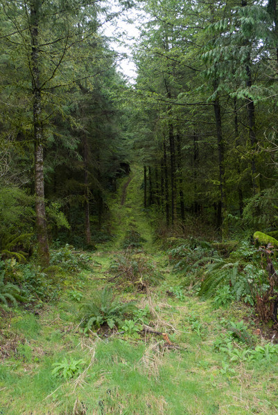 There are a lot of side roads with singletrack potential to explore.  Maybe another time.