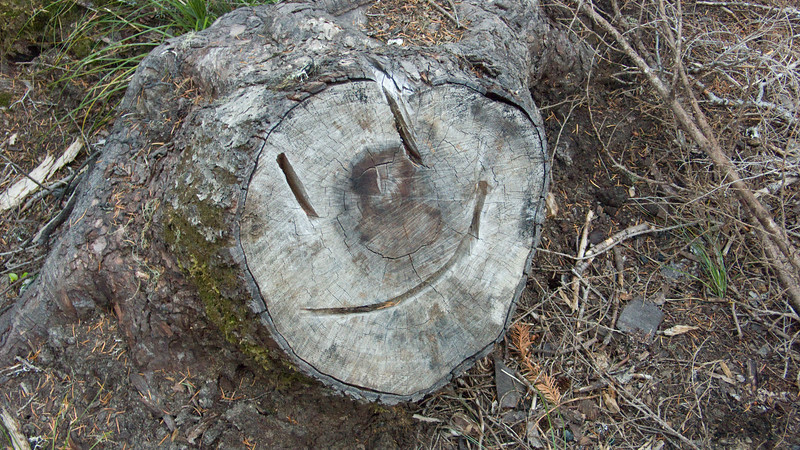 Smiling log at Crest Campground