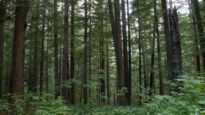 Curly Creek forest