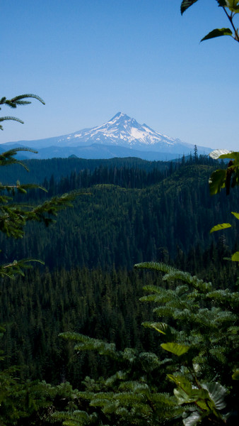 Mt Hood view from NF-42