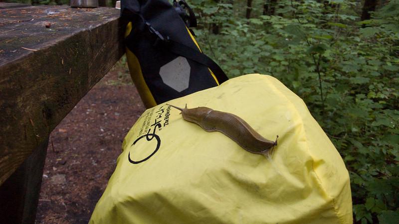 This slug liked John's handlebar bag