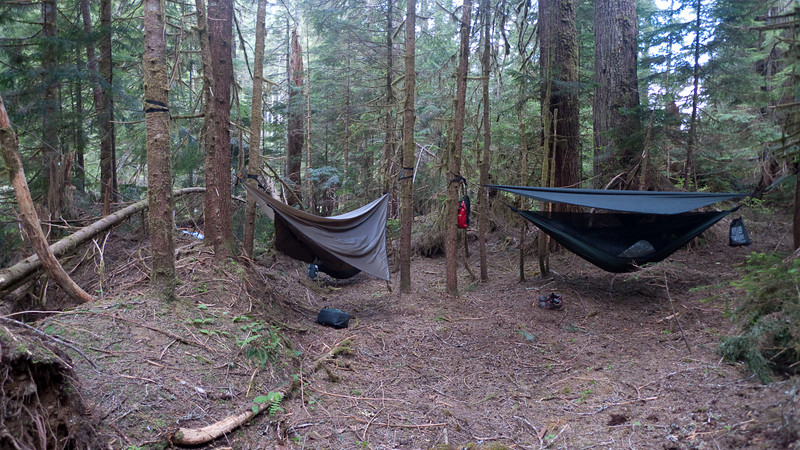 Morning view of our campsite.  Nice open forest with lots of good places for the hammocks.