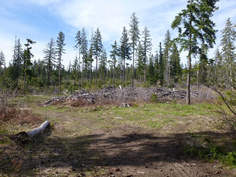 start of the roslyn recreational forest