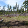 start of the roslyn recreational forest